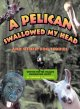 A pelican swallowed my head : and other zoo stories