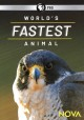 World's fastest animal