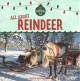 All about reindeer