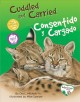 Cuddled and carried = Consentido y caragado