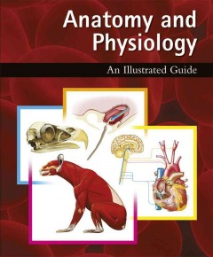 Anatomy and physiology : an illustrated guide
