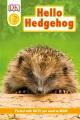 Hello, hedgehog