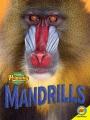 Mandrills