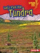 Let's visit the tundra