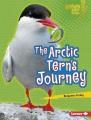 The Arctic tern's journey
