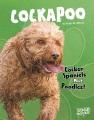 Cockapoo : cocker spaniels meet poodles!