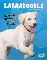 Labradoodle : labrador retrievers meet poodles!