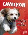 Cavachon : Cavalier King Charles spaniels meet bichon frises!