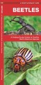 Beetles : an Introduction to Familiar North American Species.
