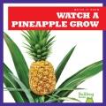 Watch a pineapple grow