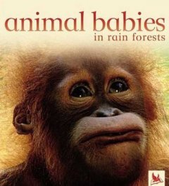 Animal babies in rain forests cover image