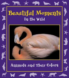 Beautiful moments in the wild : animals and their colors cover image