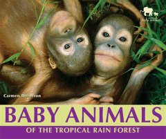 Baby animals of the tropical rain forest cover image