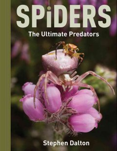 Spiders : the ultimate predators cover image