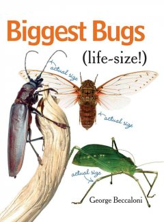 Biggest bugs life-size cover image