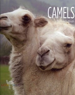 Camels cover image