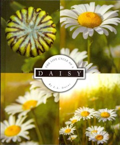 The life cycle of a daisy cover image