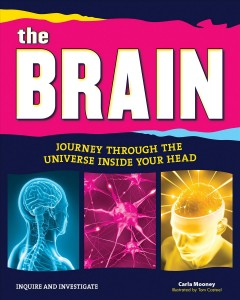 The brain : journey through the universe inside your head cover image