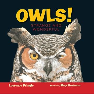 Owls! : strange and wonderful cover image