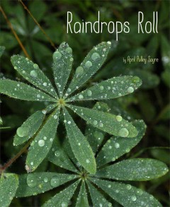 Cover art for Raindrops roll