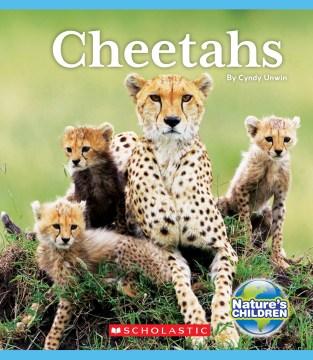 Cheetahs / by Cyndy Unwin.