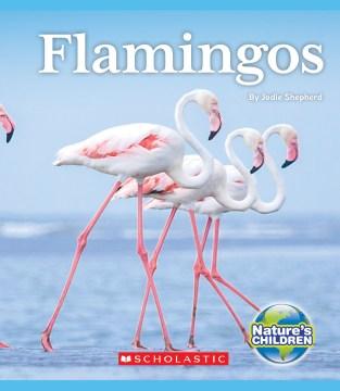 Flamingos / by Jodie Shepherd.