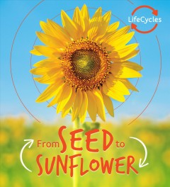 Seed to Sunflower