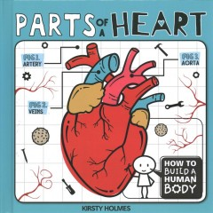 Parts of a Heart
