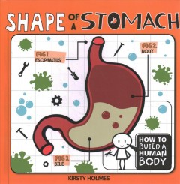 Shape of a Stomach