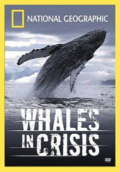 Whales in Crisis