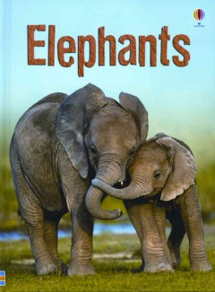 Elephants by James Maclaine ; illustrated by John Francis ; additional illustration by Tim Haggerty.