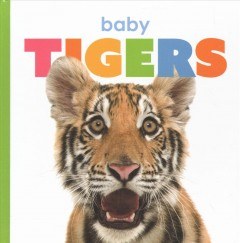 Baby tigers