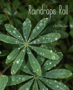 Catalog record for Raindrops roll