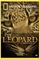 Cover for Eye of the leopard