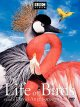Cover for The life of birds