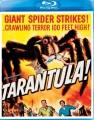 Cover for Tarantula