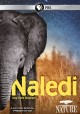 Cover for Nature: Naledi - One Little Elephant