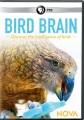 Cover for Bird brain