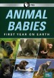 Cover for Animal babies: first year on Earth.