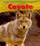 Cover for Coyote