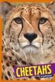 Cover for Cheetahs