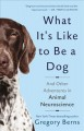 Cover for What it's like to be a dog: and other adventures in animal neuroscience