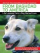 Cover for From Baghdad to America: life lessons from a dog named Lava