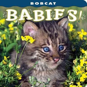 Bobcat babies!
