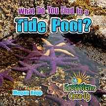 What do you find in a tide pool? - Megan Kopp