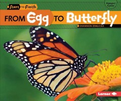 From egg to butterfly - Shannon Knudsen