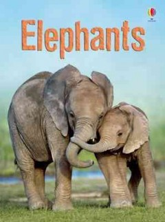 Elephants - James Maclaine