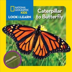 Caterpillar to butterfly - Catherine D Hughes