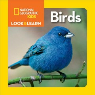 Birds - Ruth Musgrave