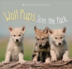 Wolf pups join the pack. -  American Museum of Natural History (COR)